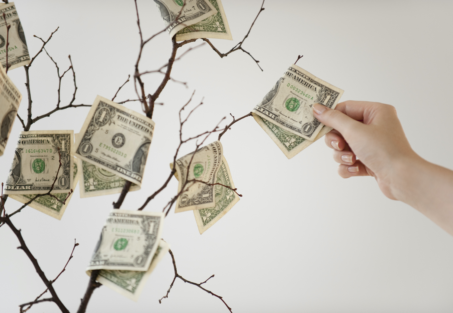 Money tree: an adult hand reaches for dollar bills growing on a leafless tree